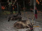 Reindeer at Santa's Cookie House 019